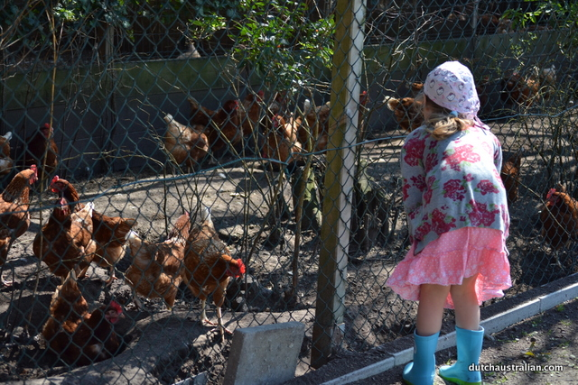 sophia and chickens