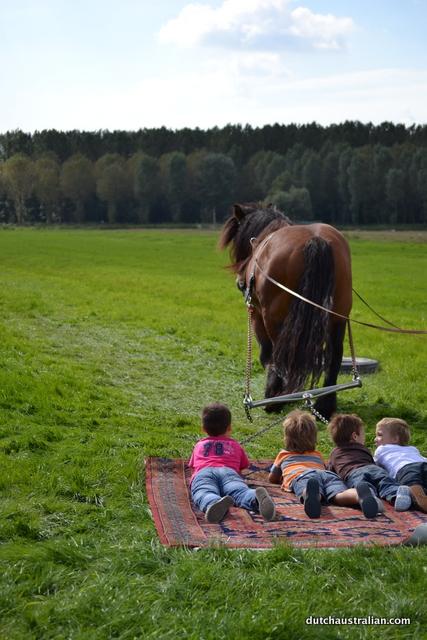 carpet behind horse
