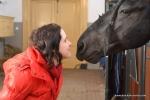 royal horse smooch